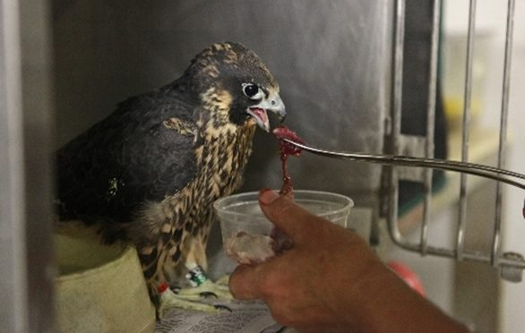 Essential Nutrition for Wildlife Rehabilitators