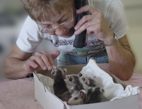 Telephone Skills – Handling Wildlife Emergency Calls