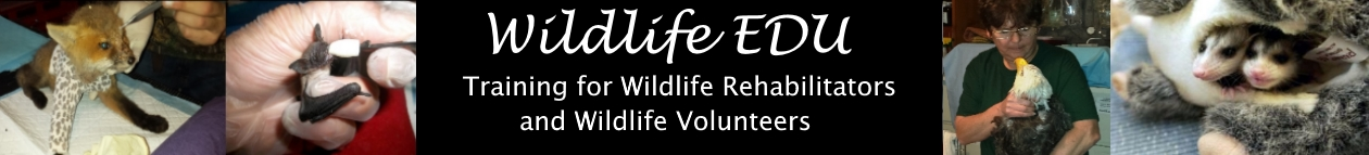 Wildlife EDU