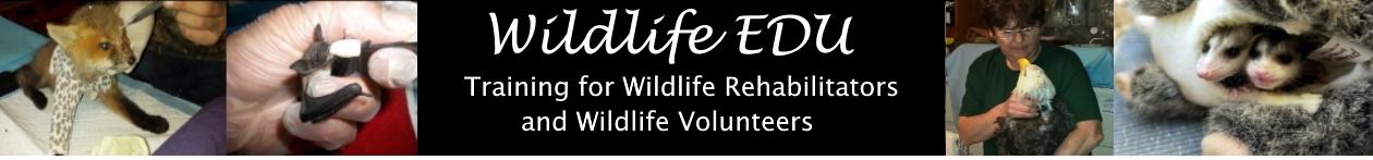 Wildlife EDU