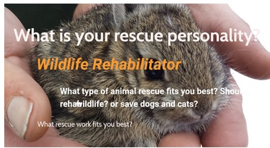 What is your rescue personality?